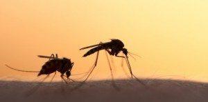 Novo caso de zika em Broward eleva para 21 o total da Flórida