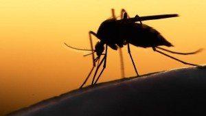 Flórida descobre nova área de zika e casos ultrapassam 1 mil