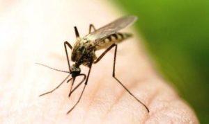 Flórida registra quase 60 casos de infecções por zika vírus em 2018