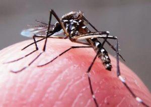 Flórida registra segunda transmissão local de Zika em 2017