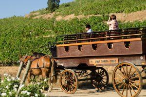 Vendima: A festa da colheita das uvas no Chile