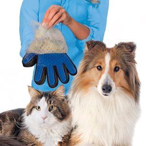 Dicas de produtos para o seu pet