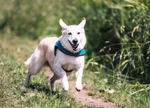 Cães da Flórida são diagnosticados com vírus de gripe mortal