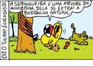 Oi! O Tucano Ecologista: Seringueira