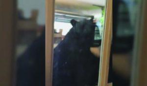 Em Orlando urso é flagrado abrindo a geladeira em uma garagem