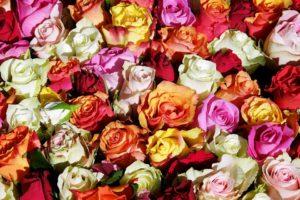 Brasileira promove workshop de arranjos com flores naturais no sul da Flórida