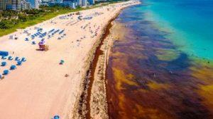 Praias de Broward e Miami-Dade são tomadas por algas