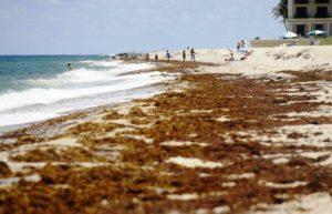 Flórida luta contra maré vermelha e algas em seu litoral
