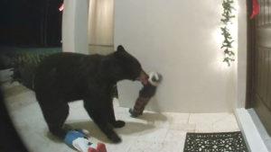 """Urso é flagrado """"tocando a campainha"""" em casa da Flórida"""