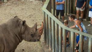 Criança cai em recinto com rinocerontes em zoológico de Melbourne (FL)