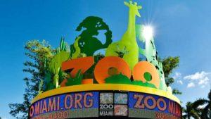 Zoo Miami oferece entrada gratuita para pessoas que levarem celulares antigos