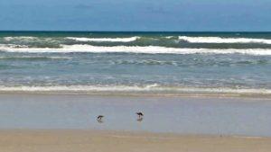Pai usa drone e flagra tubarão nadando perto dos filhos na praia da Flórida Central