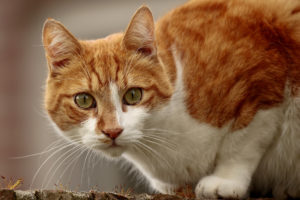 Senador da Flórida quer proibir remoção de unhas de gatos