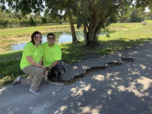 Casal captura píton de 18 pés, a segunda maior já encontrada no Everglades