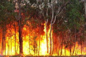 Incêndios florestais já mataram 23 pessoas e destruíram 1200 casas na Austrália
